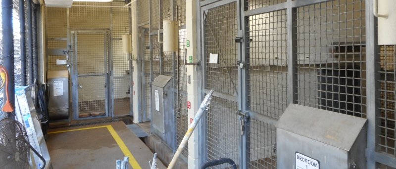The Tigers At Palm Beach Zoo Are Especially Harsh To Wall Coatings In Their Night Cages An Epoxy From Sherwin Williams Was Utilized